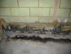 Image of mold